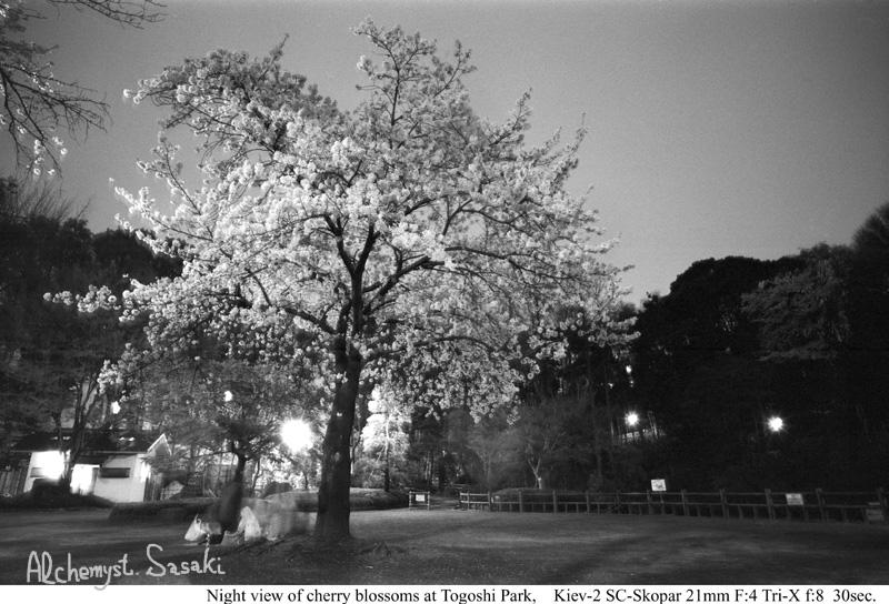 夜桜626-9