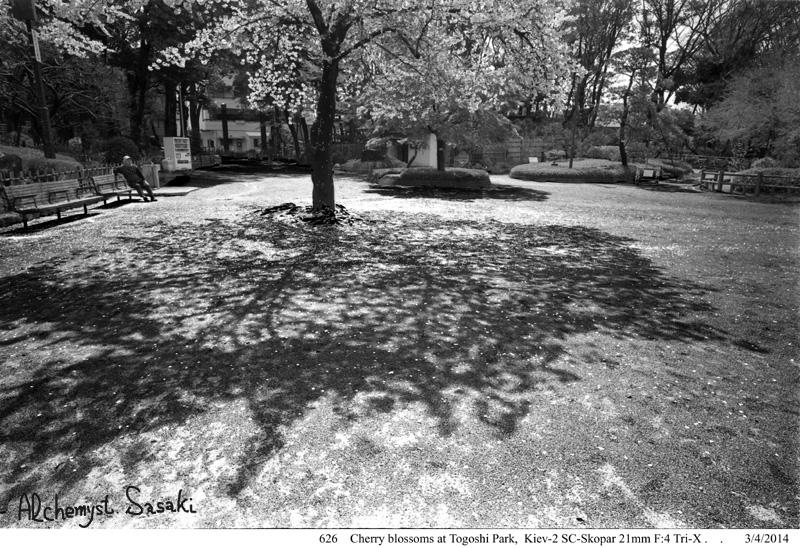 戸越の桜626-13