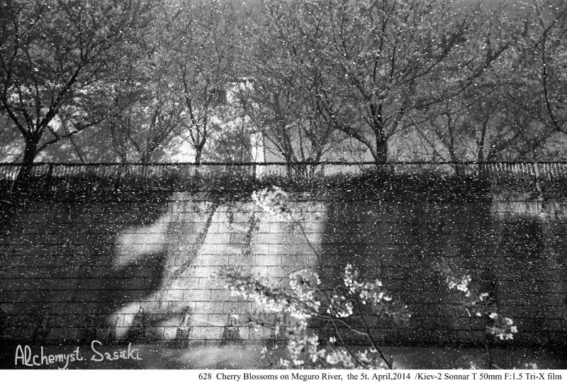 桜吹雪628-17