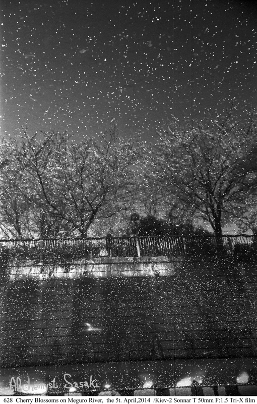 桜吹雪628-19