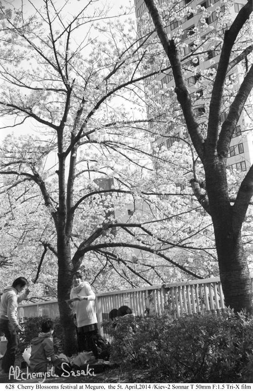 桜を楽しむ628-10