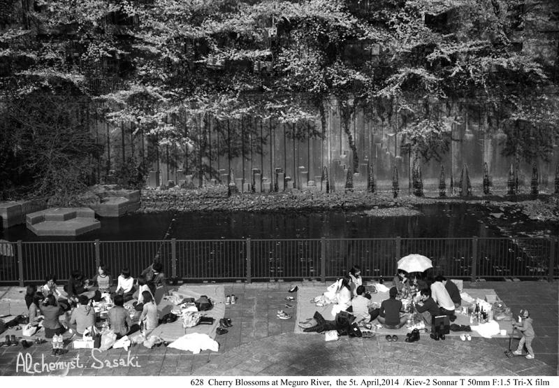 桜を楽しむ628-14