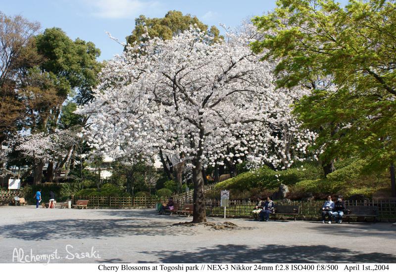 桜DSC08292