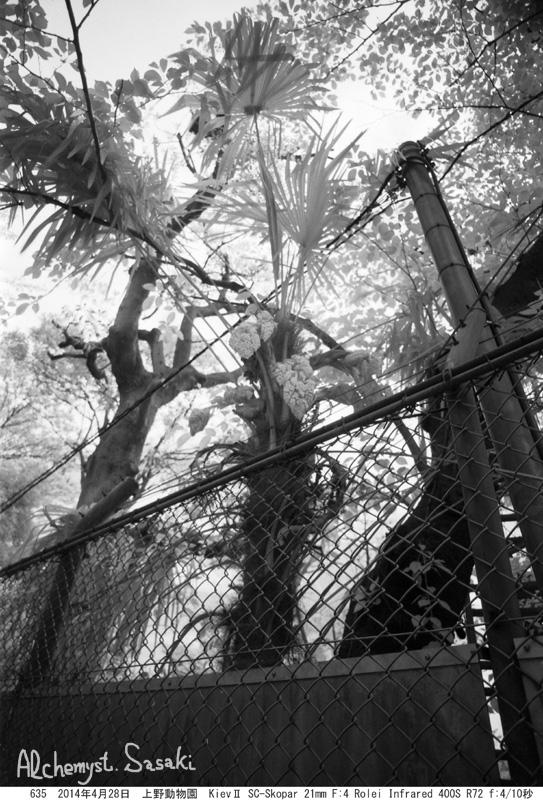 上野動物園635-16