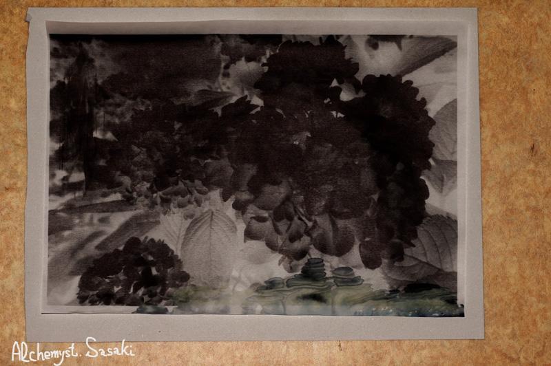 紫陽花DSC09499