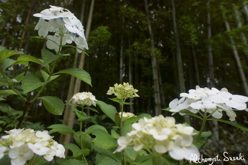 本土寺DSC09591