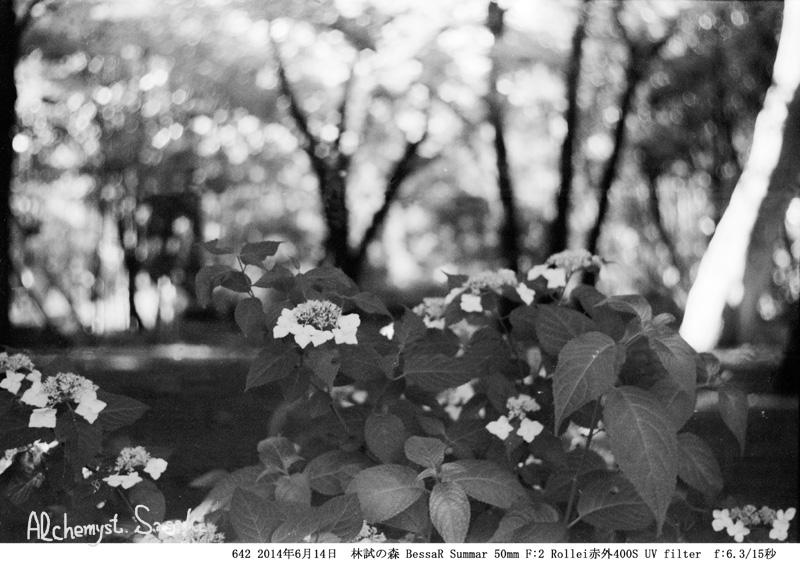 紫陽花642-27