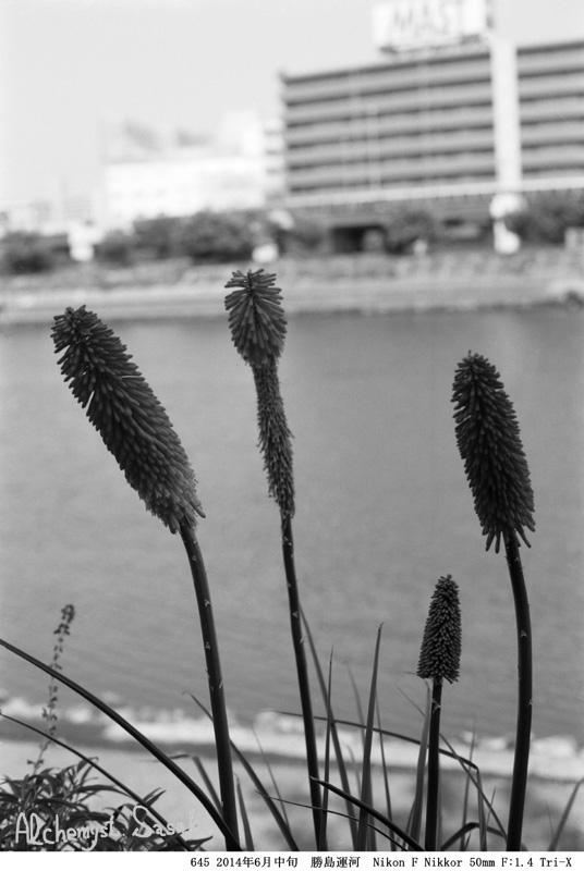 勝島運河645-1