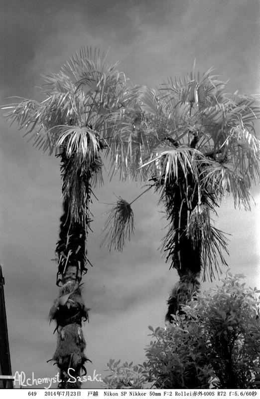 棕櫚649-8
