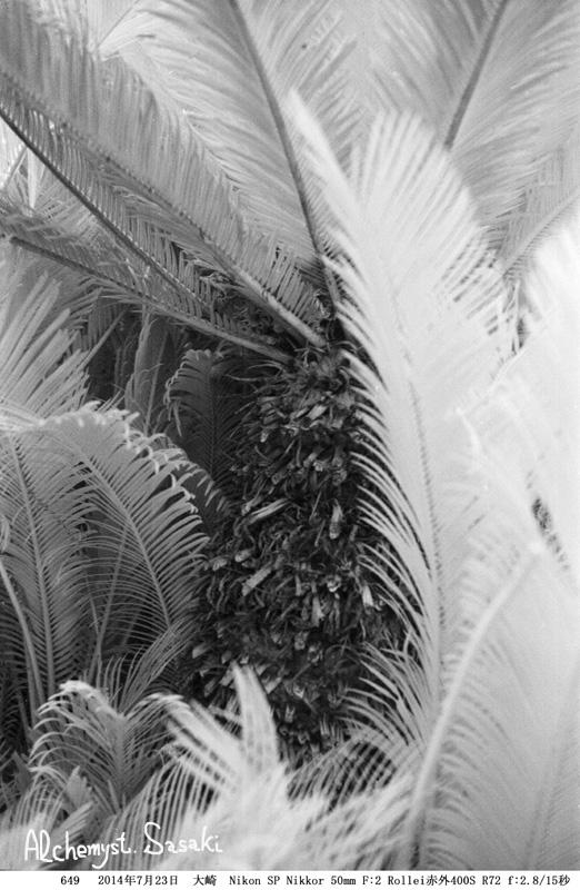 棕櫚649-10