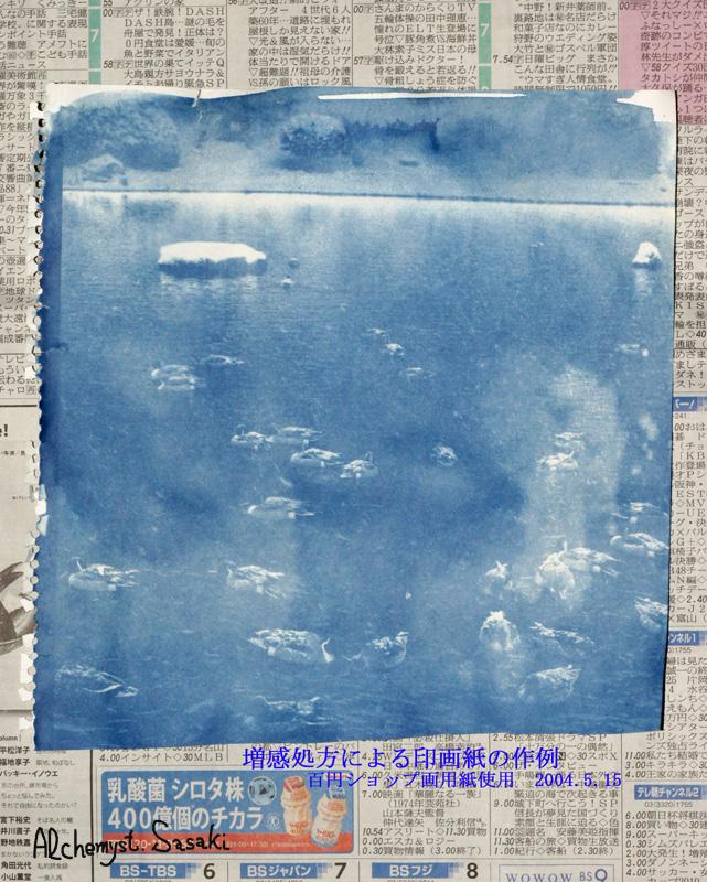 CyanoTypeDSC09403.jpg