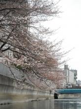 お花見 20140329