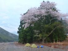20140404 桜の木の下で
