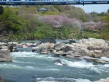 20140412 平戸橋下 ほれほれほれほれ