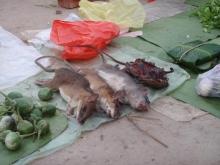 phonsali+market_rats!_convert_20140617220910