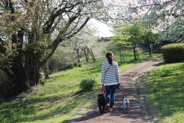 大崎公園10