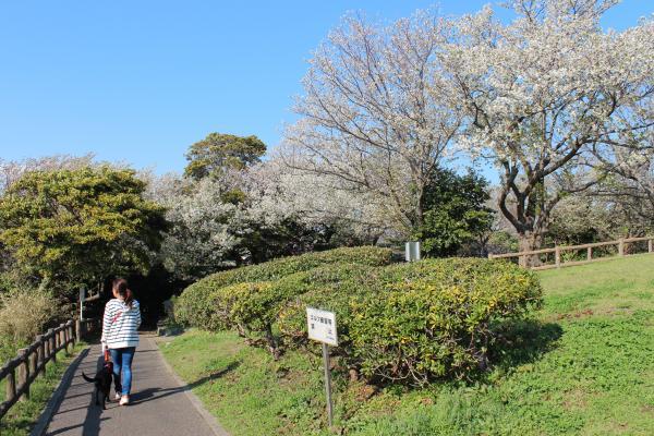 大崎公園12