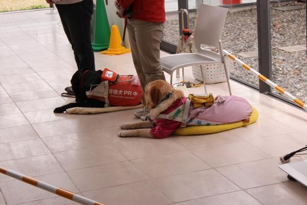 盲導犬の里4