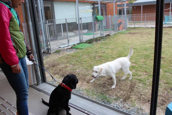 盲導犬の里7