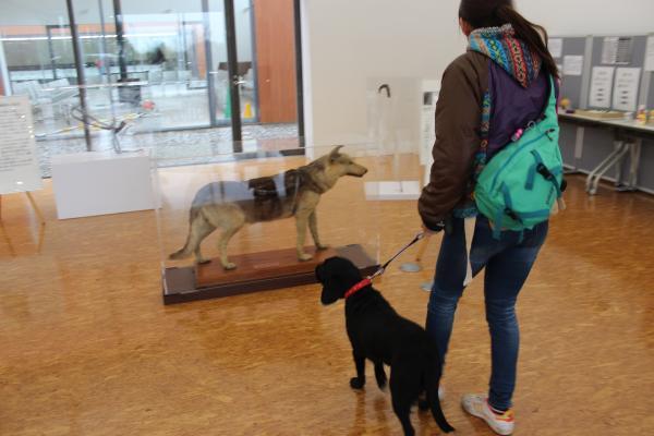 盲導犬の里9