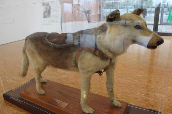 盲導犬の里11