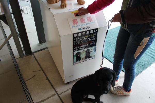 盲導犬の里15