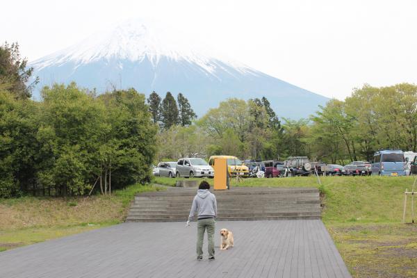 富士ハーネス6