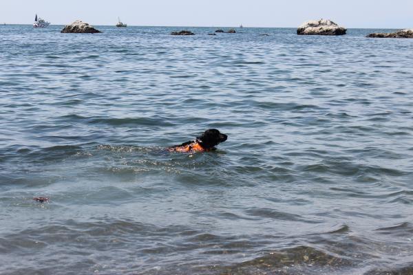 クララの海岸物語2