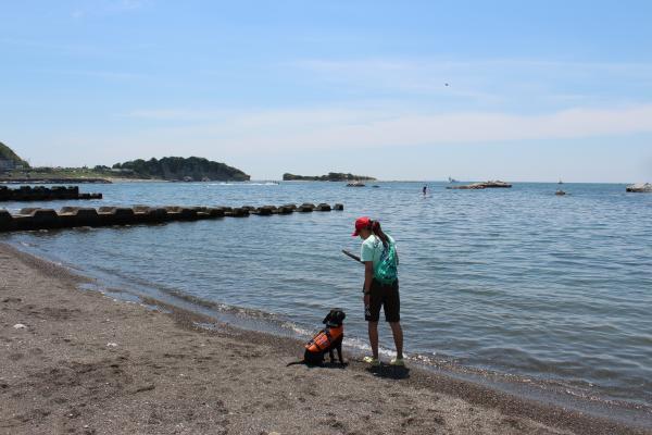 クララの海岸物語11