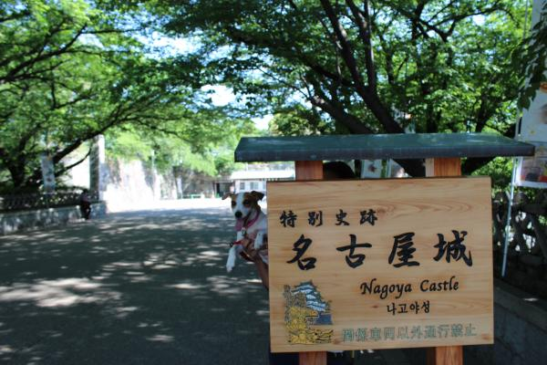 名古屋城4