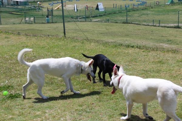 多犬種オフ会3