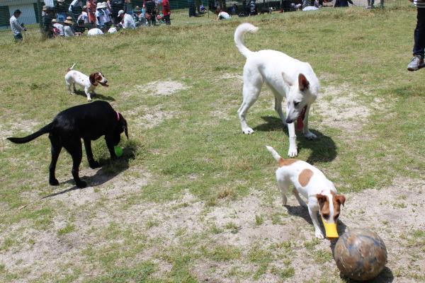 多犬種オフ会4