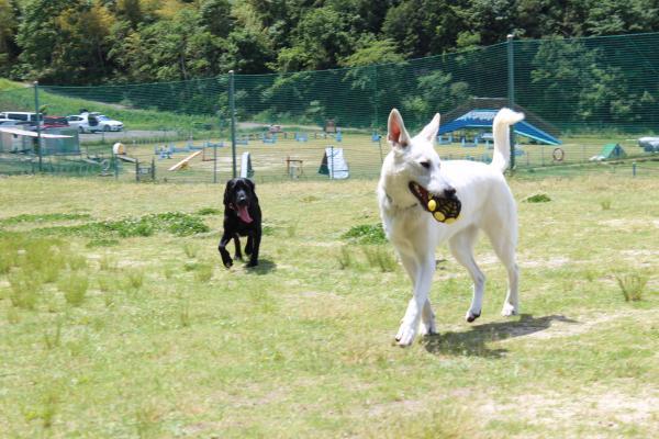 多犬種オフ会5