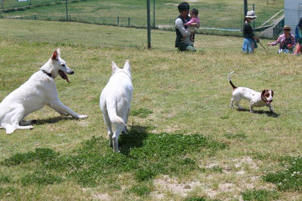 多犬種オフ会6
