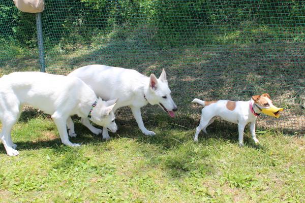 多犬種オフ会7