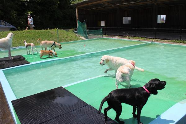 多犬種オフ会8