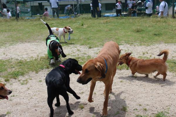 多犬種オフ会10
