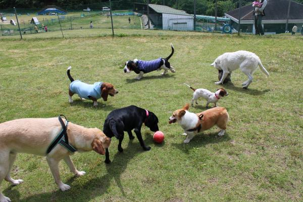 多犬種オフ会11