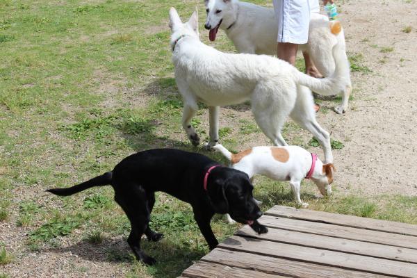 多犬種オフ会13