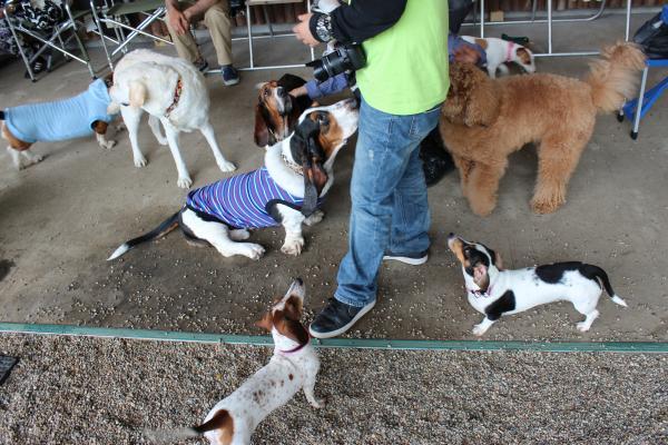 多犬種オフ会14