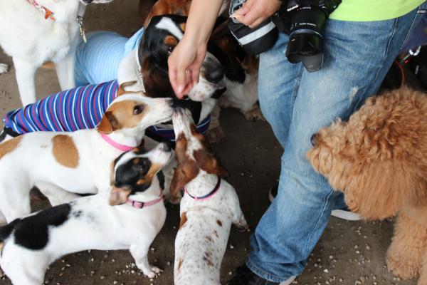 多犬種オフ会15