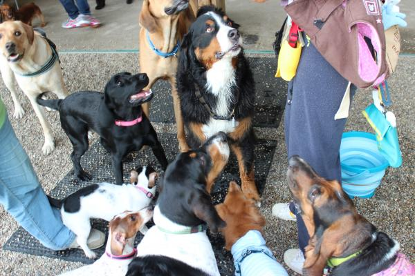 多犬種オフ会16