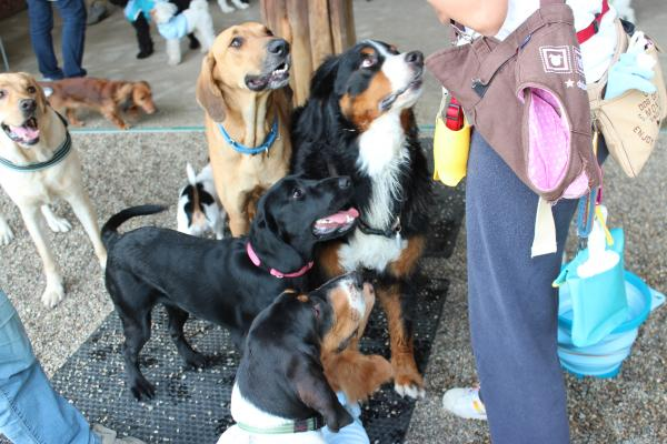 多犬種オフ会17