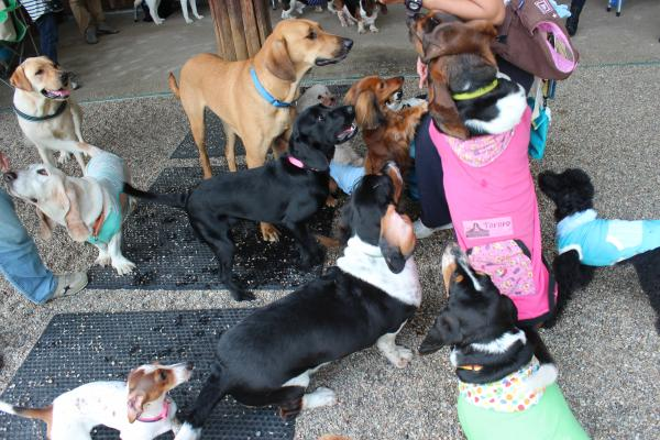 多犬種オフ会18