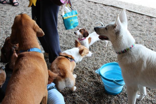 多犬種オフ会19
