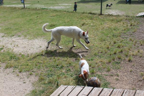 多犬種オフ会21