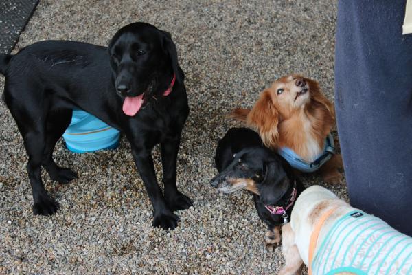 多犬種オフ会22
