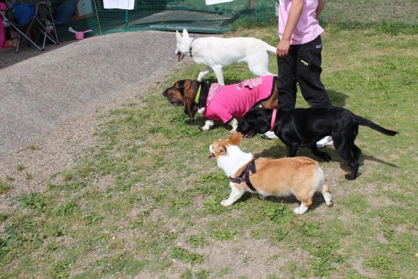 多犬種オフ会23