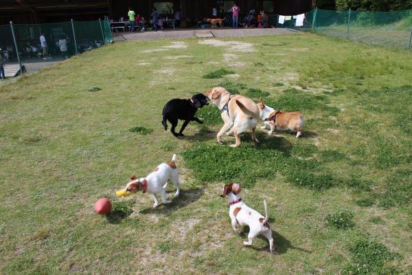 多犬種オフ会25