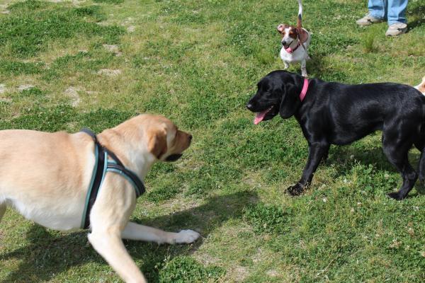 多犬種オフ会26